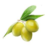 buah-zaiton
